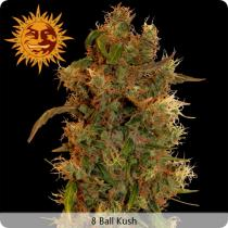 Barneys Farm 8 Ball Kush Feminizované 10 ks