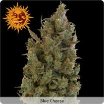 Barneys Farm Blue Cheese Feminizované 5 ks